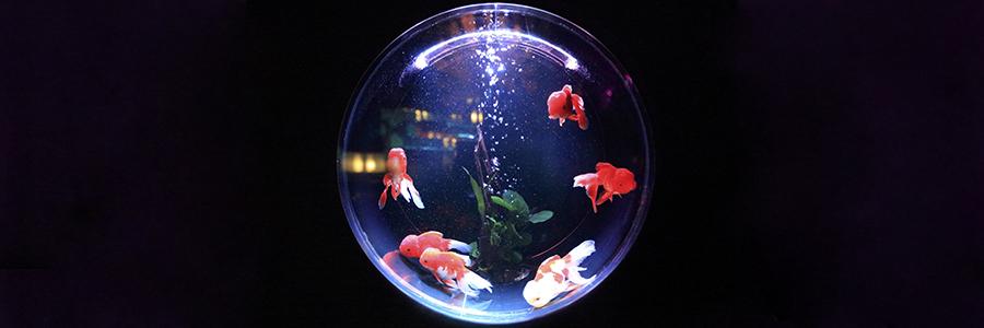Фэн-шуй и аквариум