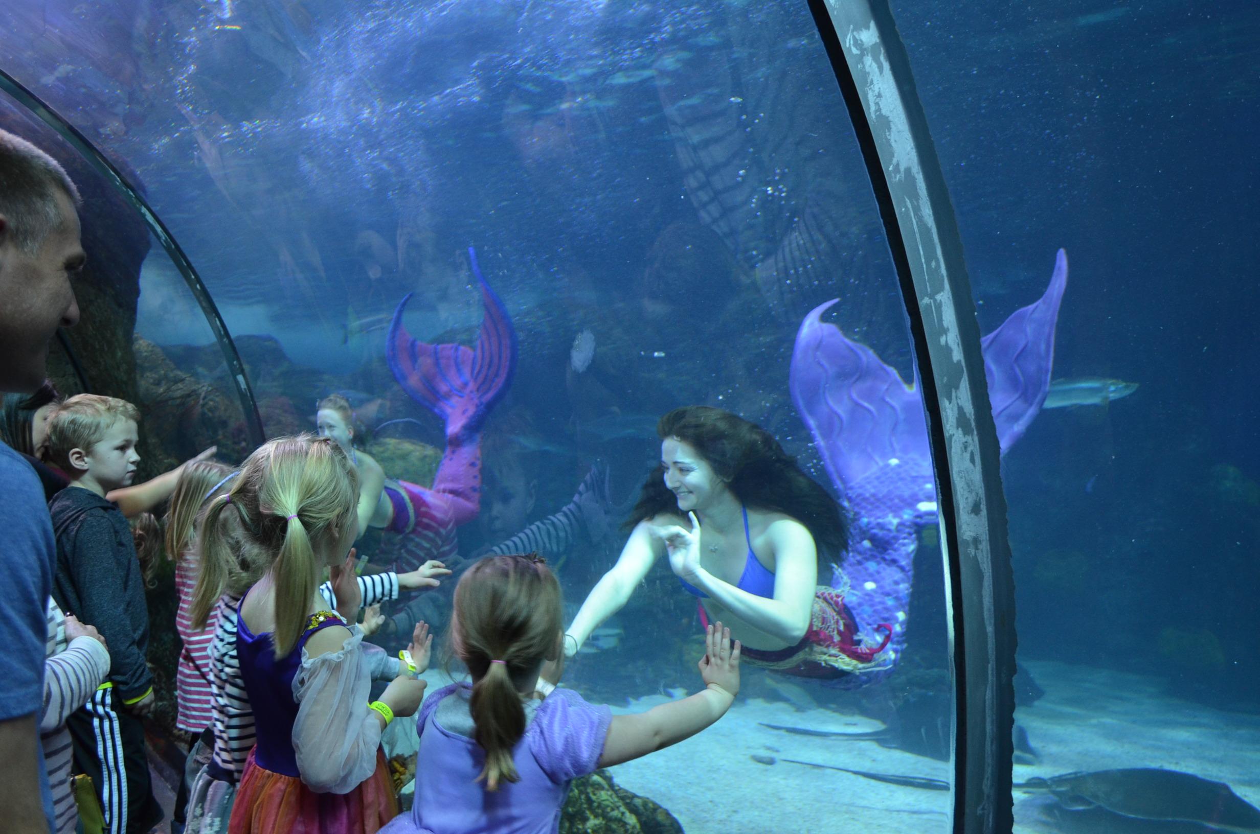 Русалки в аквариуме