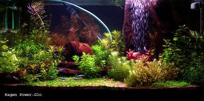 Освещение в аквариуме различными типами ламп