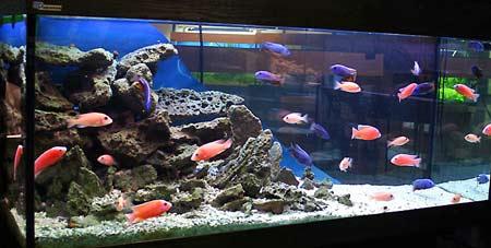Первый шаг к морскому аквариуму