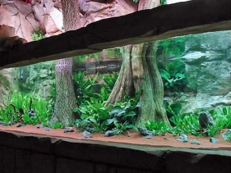 Дизайн аквариума от Оливера Кноутта