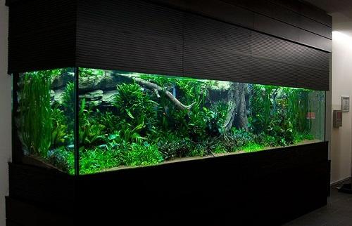 Дизайн аквариумов от Оливера Кноутта