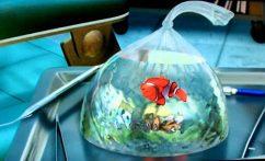 После ошеломительного успеха мультфильма производства студии Pixar «В поисках Немо» прототип главного героя-рыбка-клоун стала бестселлером продаж и самым желанным обитателем