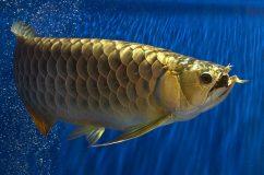 конкурс самых красивых аквариумных рыбок