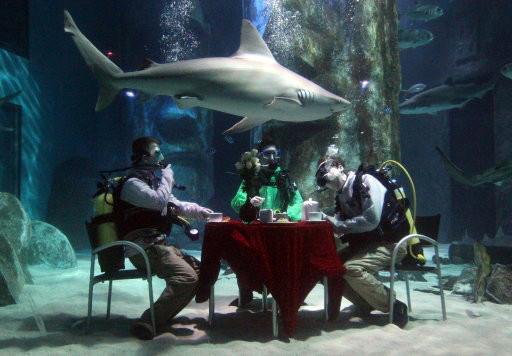 Иметь у себя в гостиной аквариум с настоящей акулой – мечта детства огромного количества людей, живущих в самых разных уголках мира.