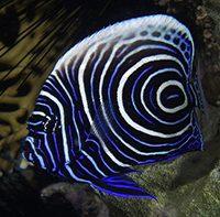 Самые красивые морские аквариумные рыбки