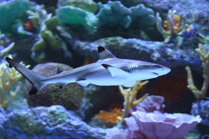 Акула в моей гостиной