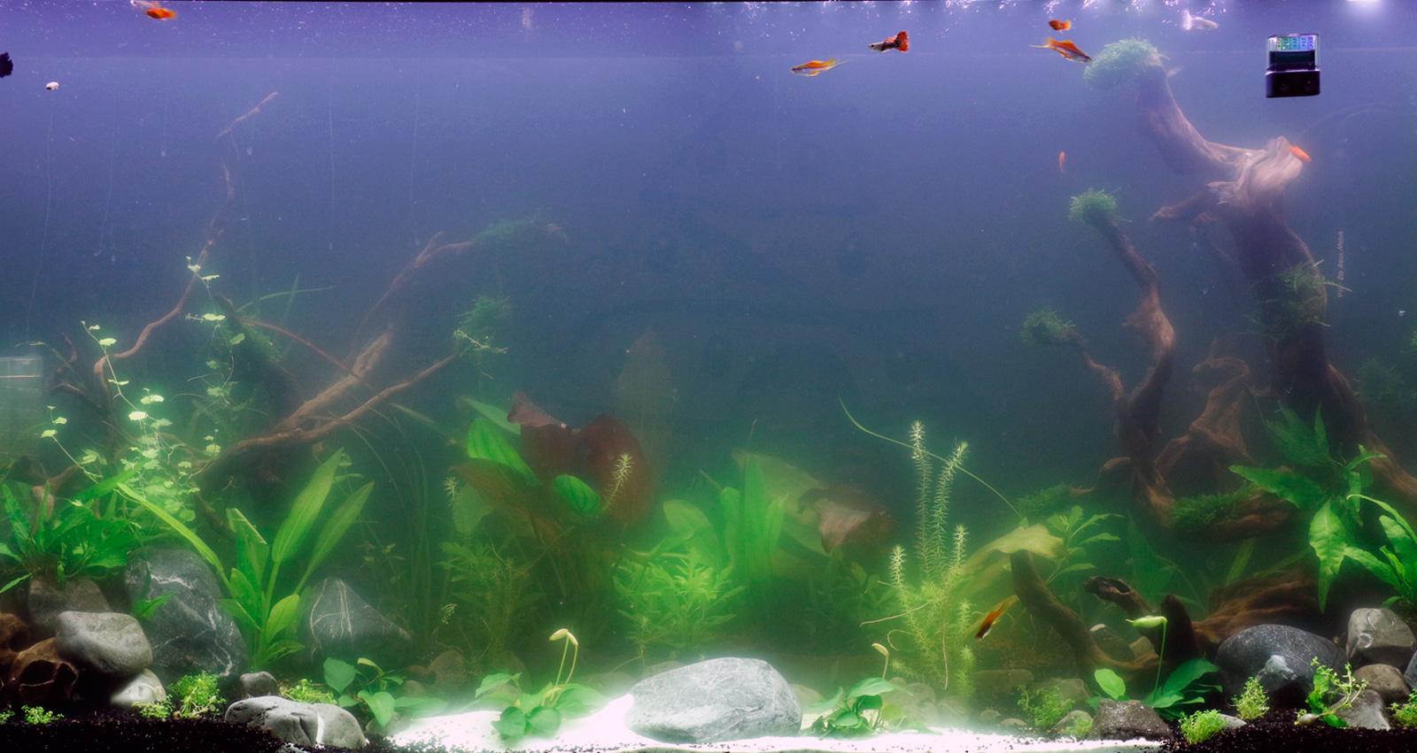 Свежий аквариум проблемы