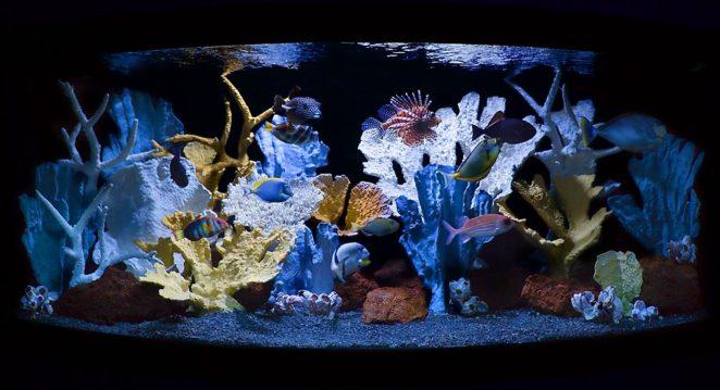 Сделать коралл в аквариум своими руками 686