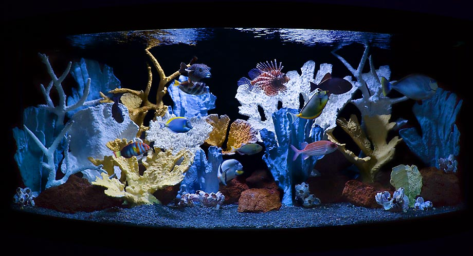 Яркое оформление аквариума