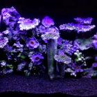 аквариумный декор