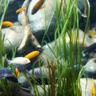 Лучшие аквариумные растения