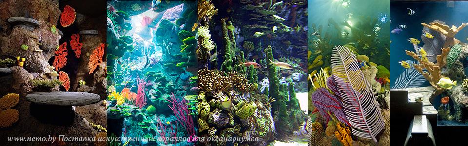 Купить кораллы для океанариума