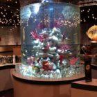 Фото аквариума оформленного красными горгонариями
