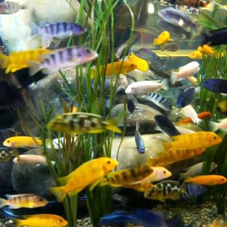 Премиальные растения для аквариума