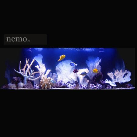 Кораллы для аквариума купить