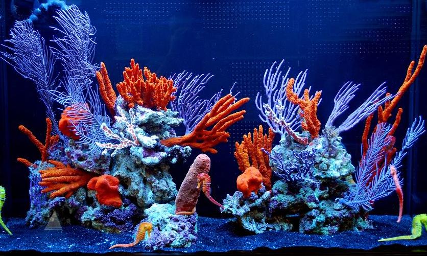 Горгонарии в аквариуме