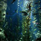 Морские растения для аквариума