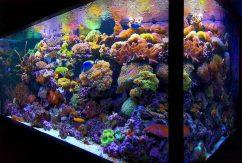 Что такое рифовый аквариум?