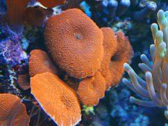 Морские грибы