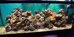 Цвет фона в аквариуме