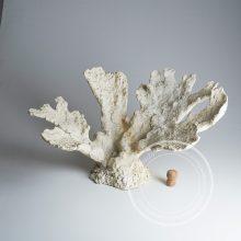 Искусственные кораллы для аквариума фото