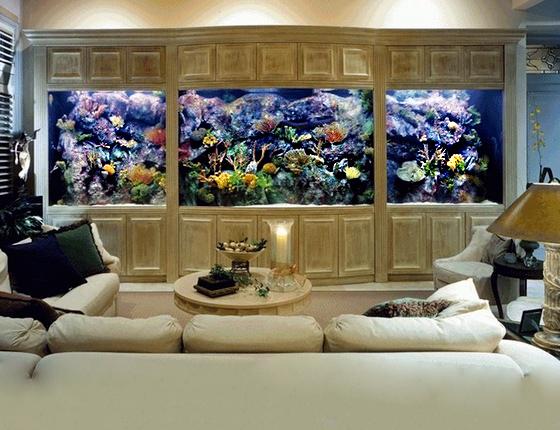 Фешенебельный аквариум