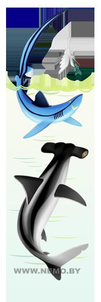Акула молот и морская лисица
