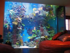Самые красивые аквариумы частного интерьера