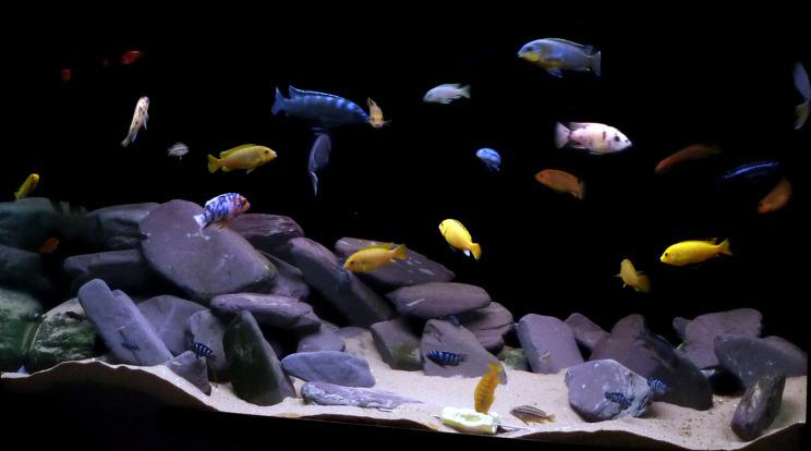 Как сделать черный фон в аквариуме