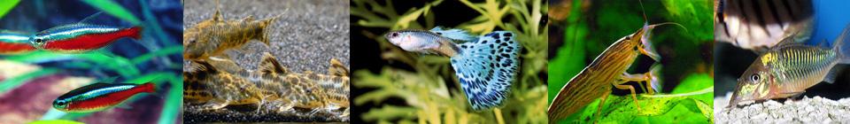 Совместимость аквариумных рыбок группа 1