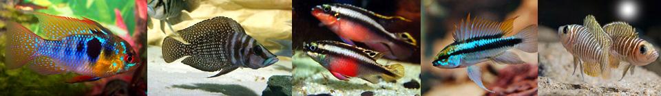 Совместимость аквариумных рыбок группа 4