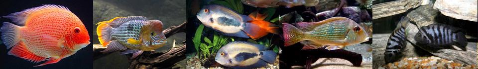 Совместимость аквариумных рыбок группа 5