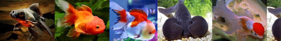 Совместимость аквариумных рыбок группа 11
