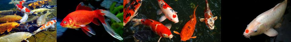 Совместимость аквариумных рыбок группа 12