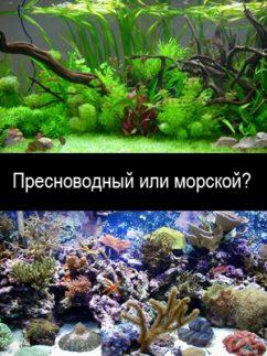 Переделка пресноводного аквариума в морской