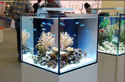 Мини-риф