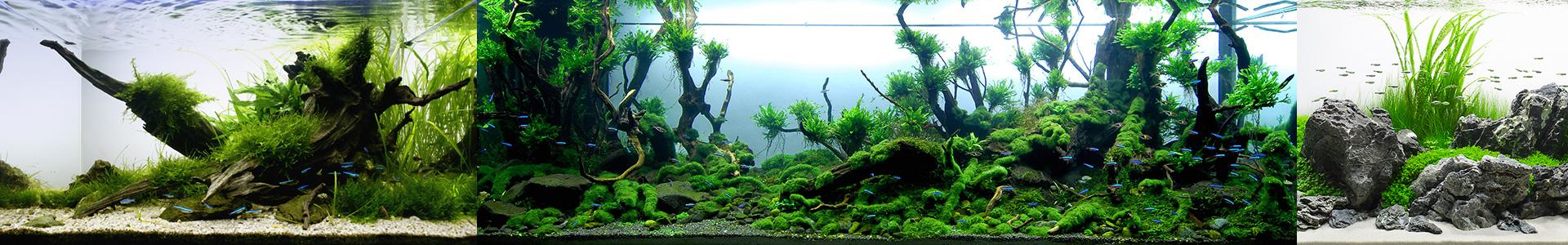 Аквариумы с живыми растениями
