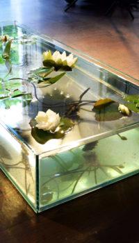 Как установить аквариум по фен-шуй