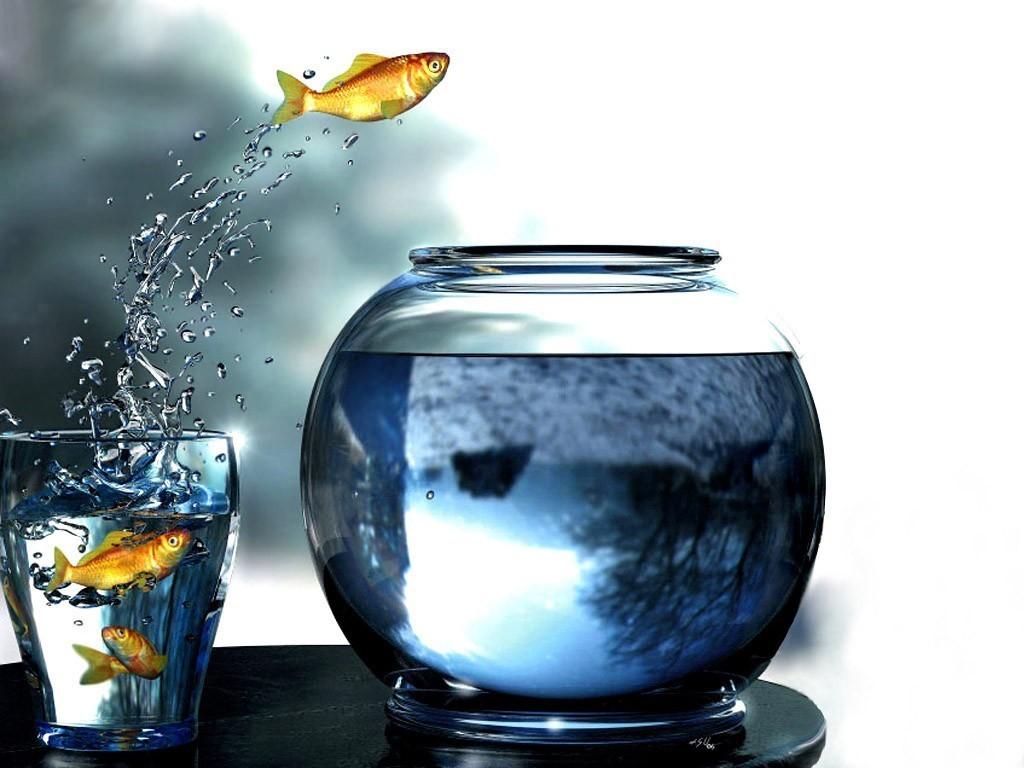 Рыбки могут выпрыгивать из аквариума