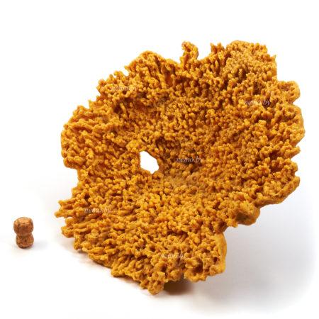 Большой столовый коралл