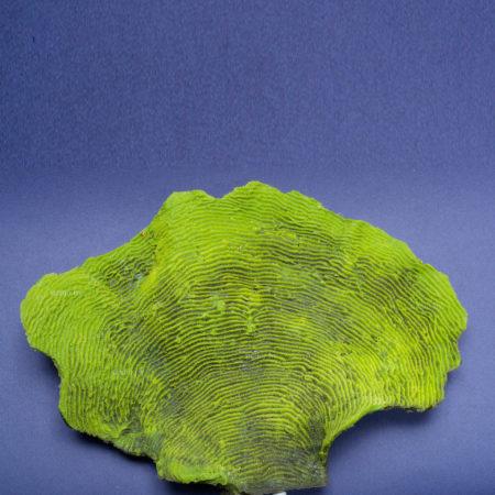Коралл Lettuce Medium