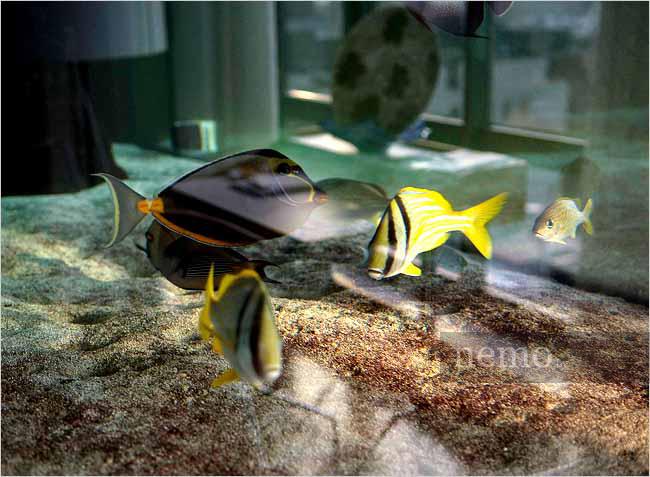 Аквариумные рыбки в интерьере