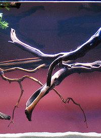 Эстетика аквариумного освещения