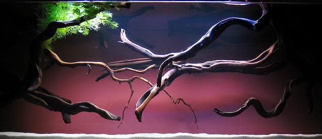 Эстетика подсветки аквариума