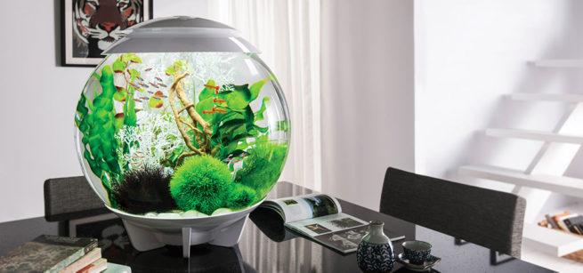 malenkie-akvariumy