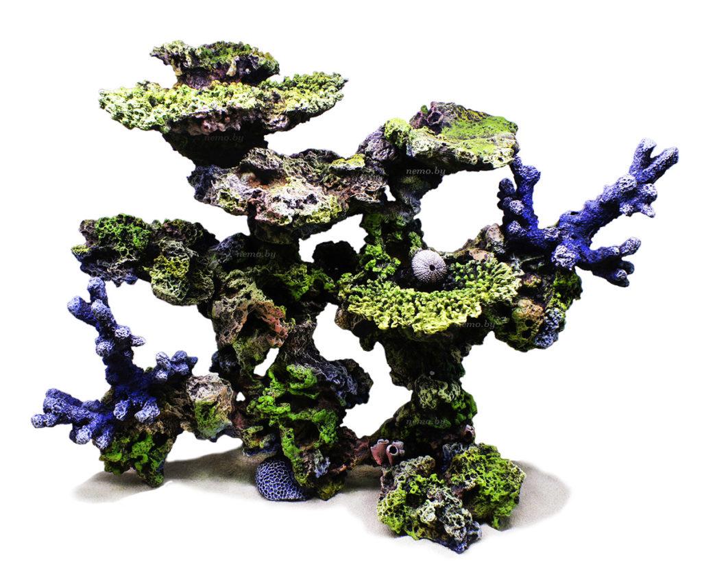 Риф с столовыми кораллами