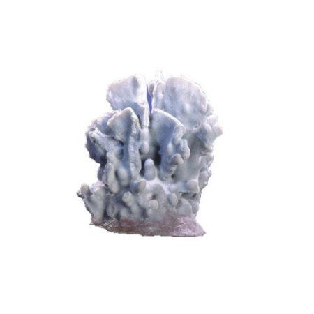 Купить голубой коралл для аквариума
