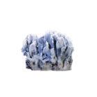 Большой голубой коралл