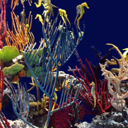 Синтетические кораллы купить